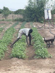 Día Mundial de la Agricultura: Estudiante de agricultura trabajando en el huerto